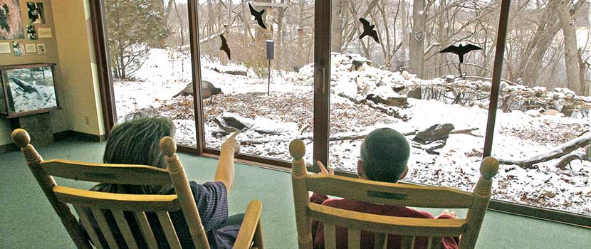 Two people sit in chairs and watch birds out the window
