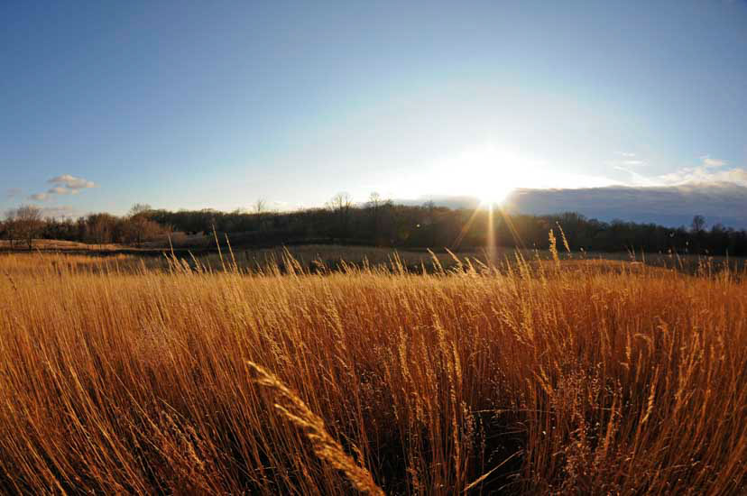 View of the golden prairie grasses