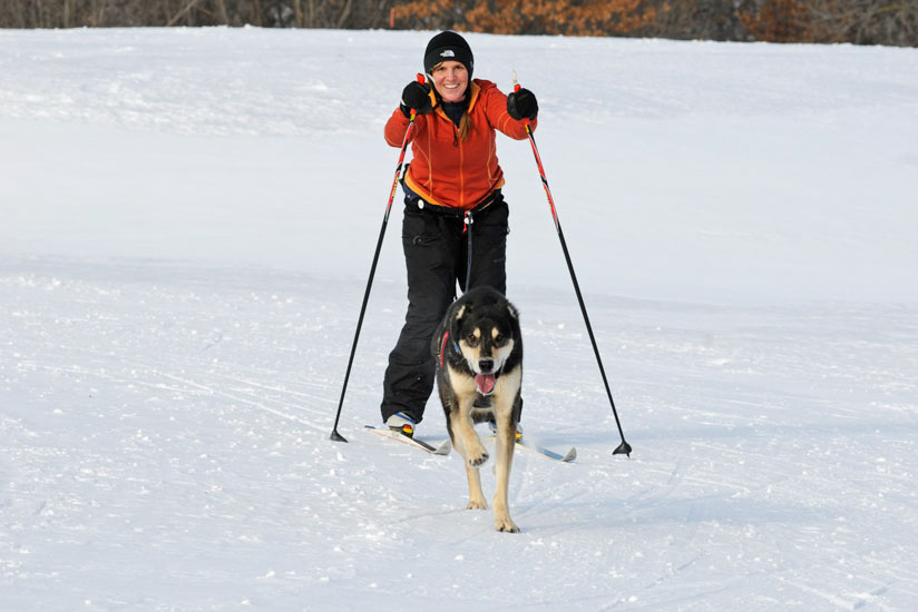 Woman on skis being pulled by dog