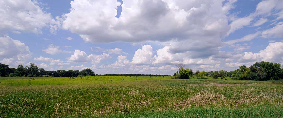 View across open field