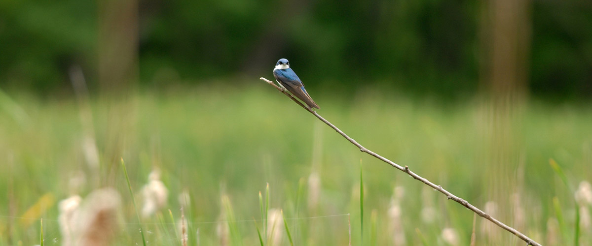 Blue bird on a twig