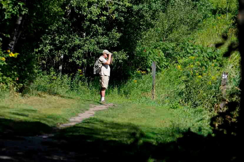 Hiker on wooded trail