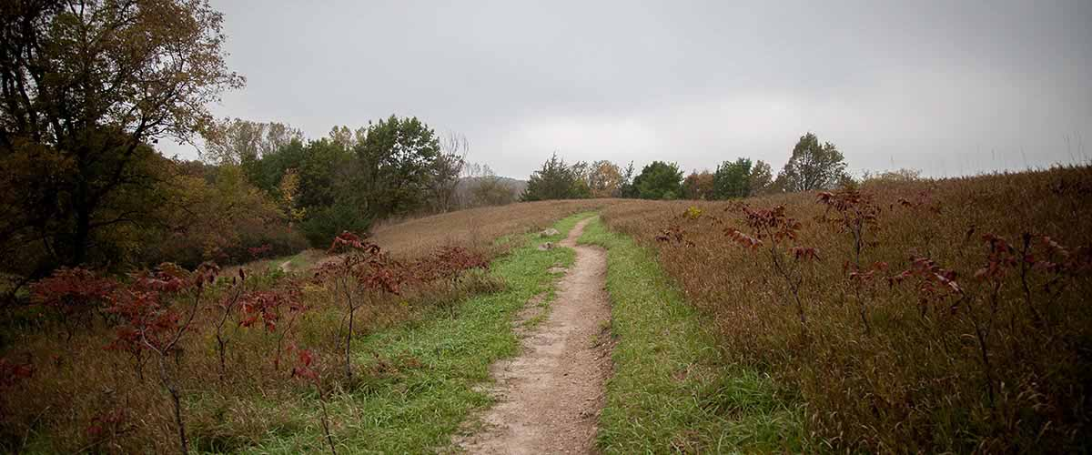 Turf trail cuts through sumac that has turned red in the fall.