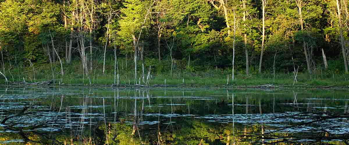 View of wetland and trees