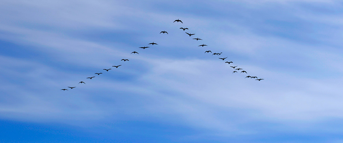 View of blue sky with a formation of geese