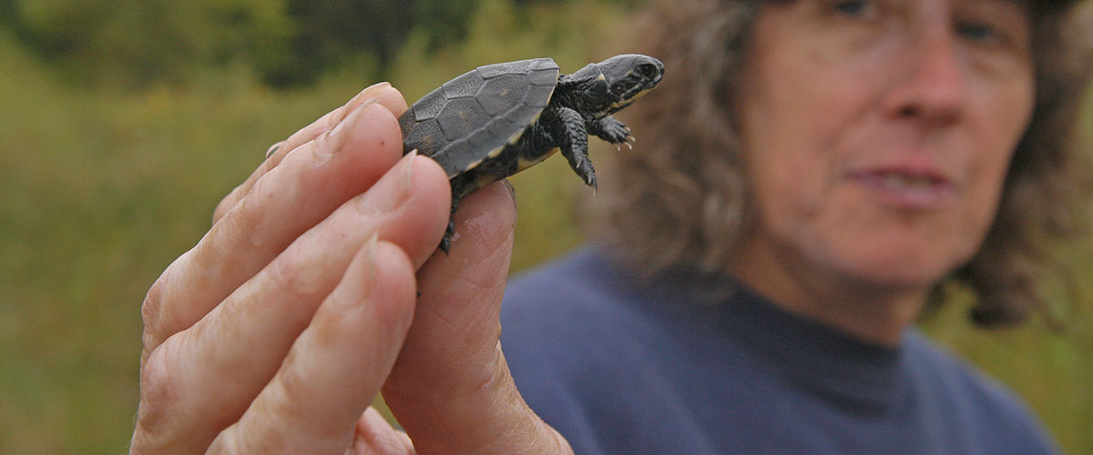 Naturalist with baby turtle