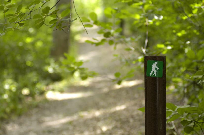 Wooded hiking trail