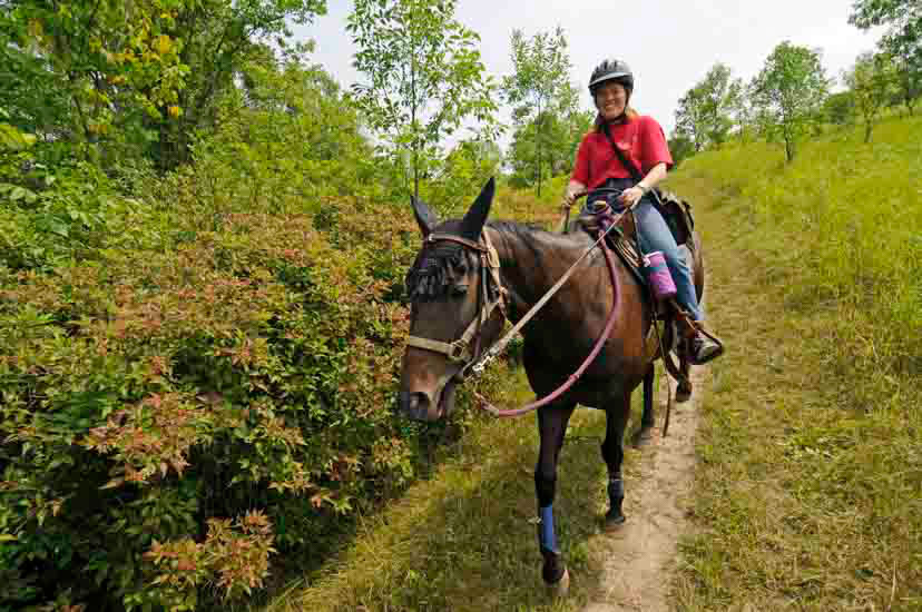 Horseback rider on trail