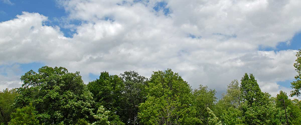 View of clouds and tree tops
