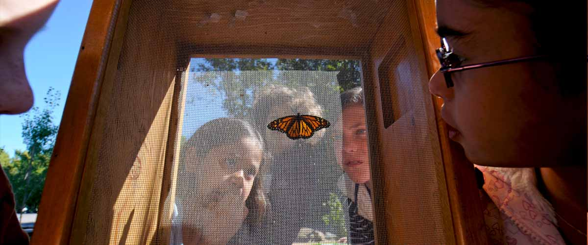 kids look closely at a monarch butterfly