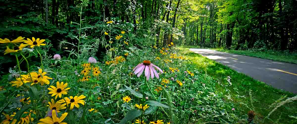 Wooded trail with native flowers