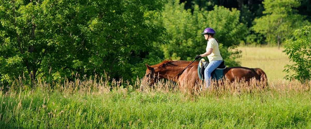 Horseback rider in tall grass
