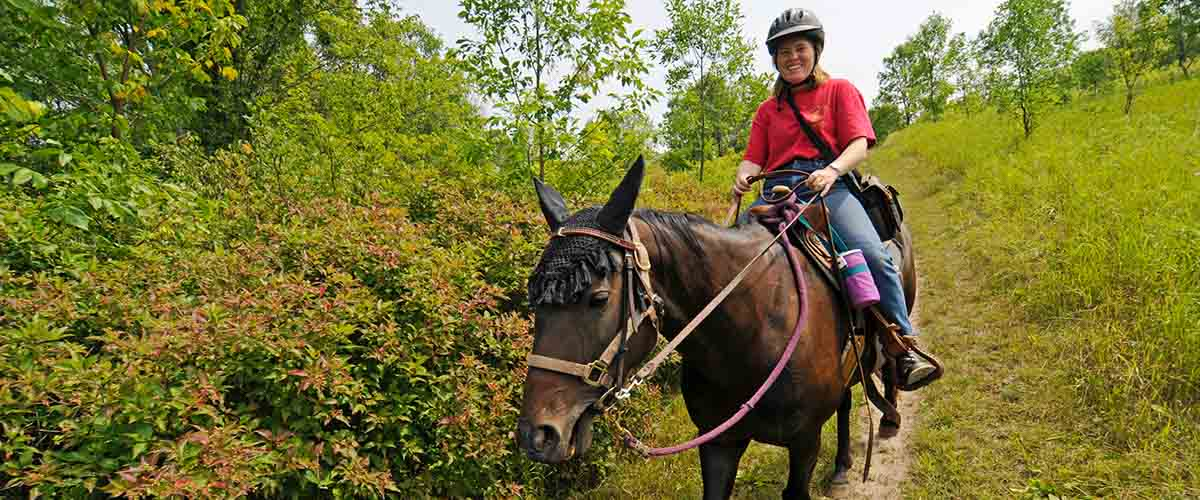 Horse and rider on wooded trail