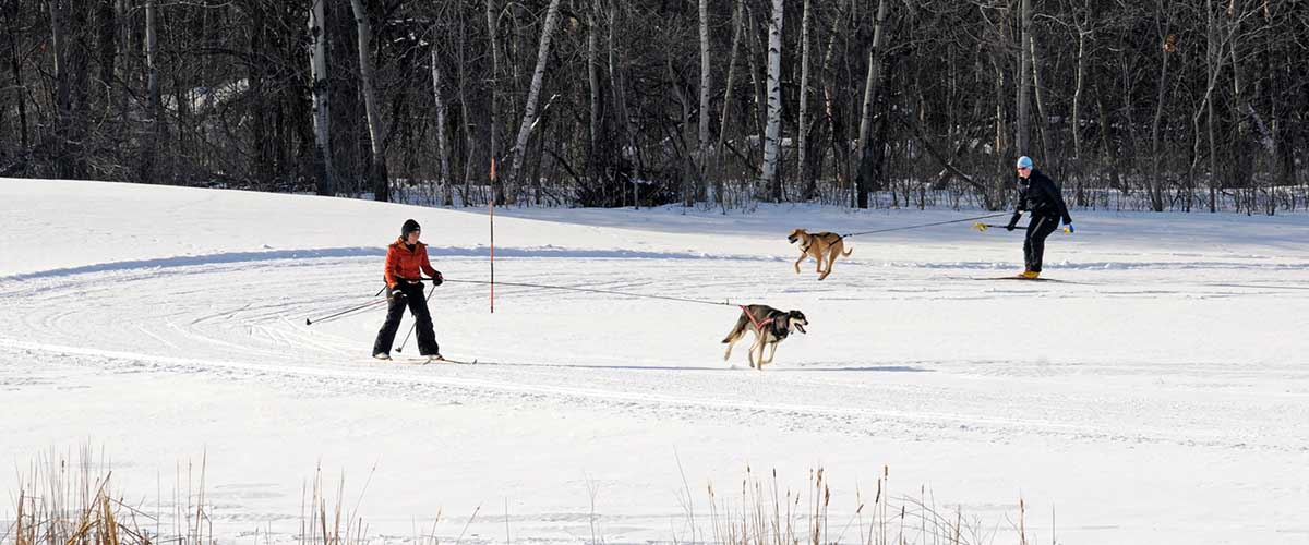 Skijourers being pulled by dogs