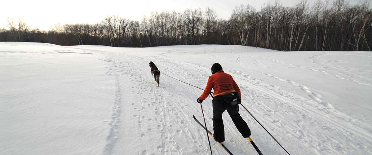 Skier being pulled by dog
