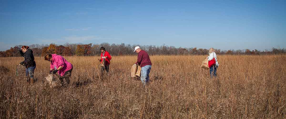 A group pulls seeds from a prairie