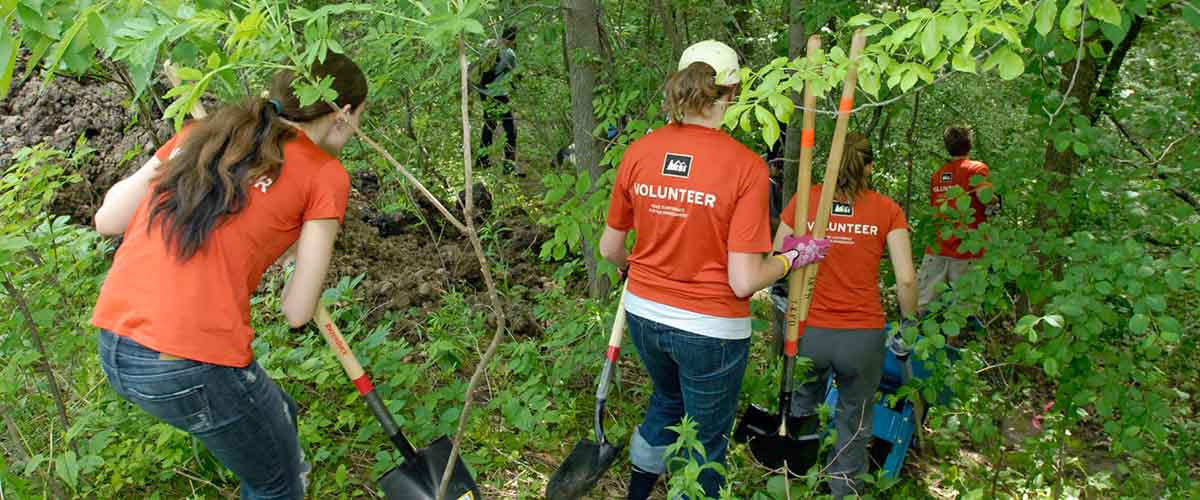 A group of volunteers with shovels in a forest