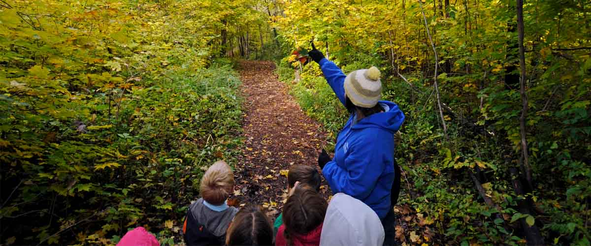 children exploring the forest with a nature educator