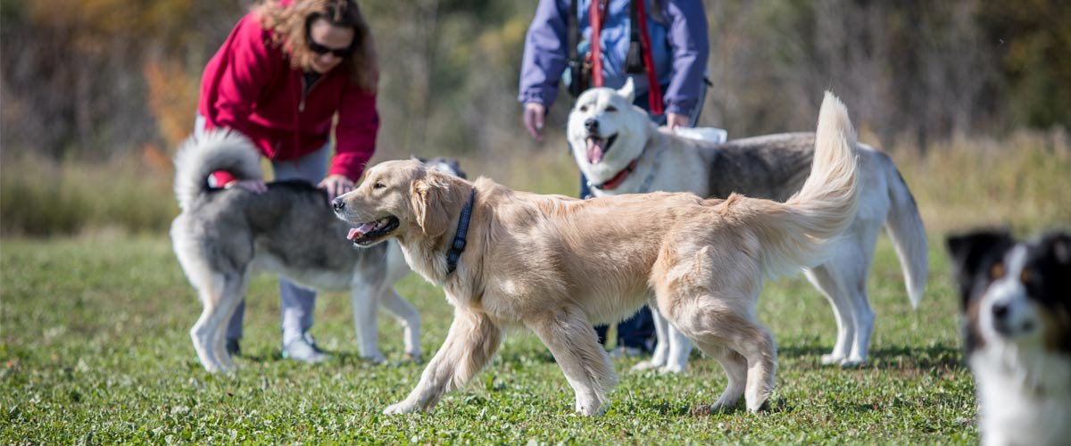 dogs and their people in carver park
