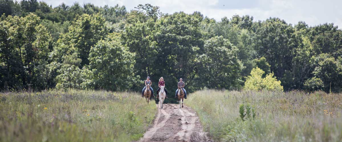 three horseback riders on a trail that cuts through prairie with woods in the background
