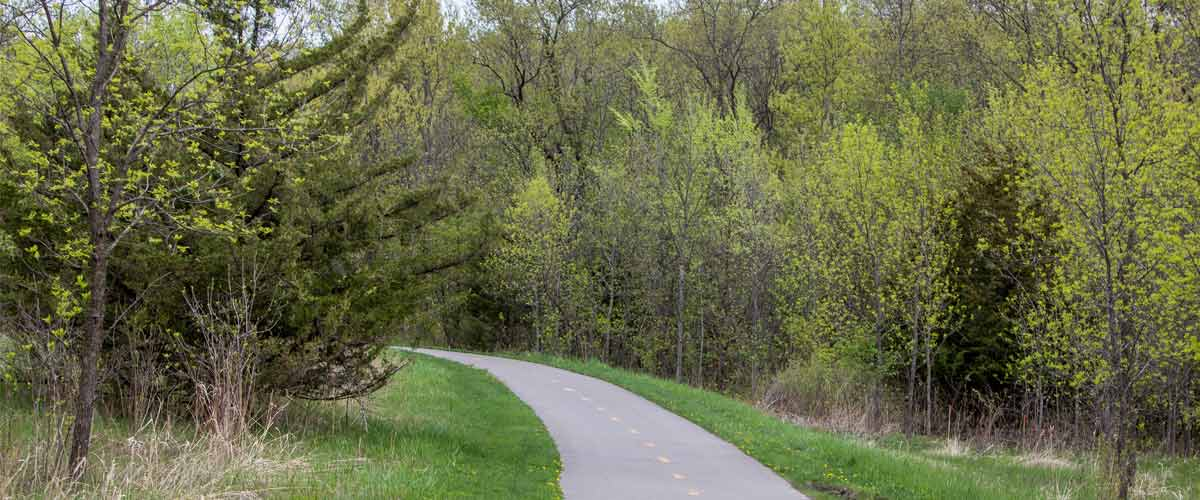 a pave trail going through trees