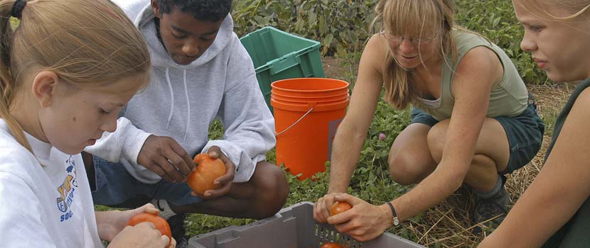 youth farmers harvesting crops