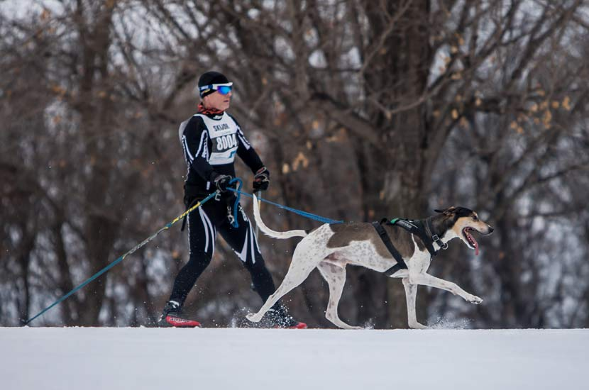 a man skiing with a dog.