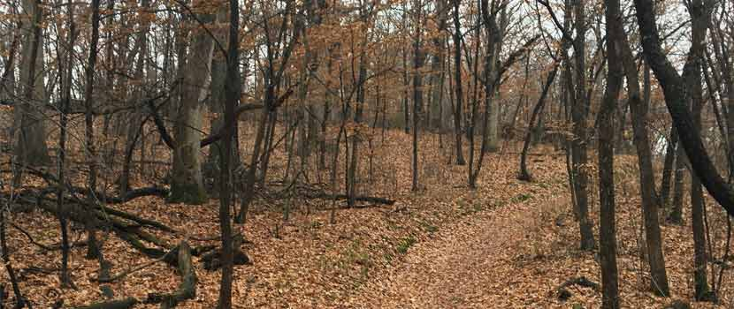 a wooded trail with leaves on the ground