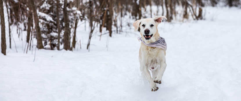 dog running off leash in winter