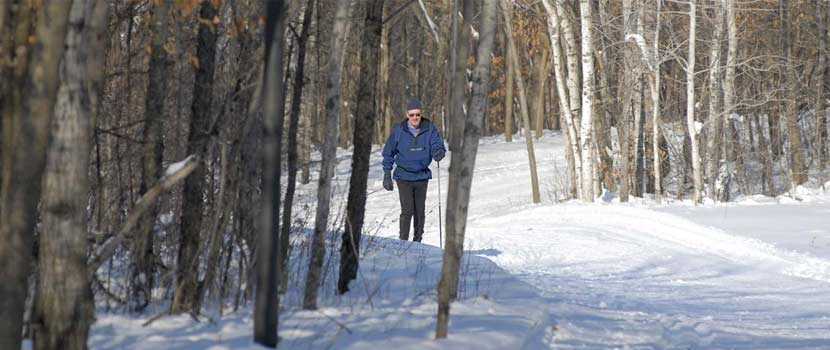 a man in a blue jacket skis on a trail in the woods.