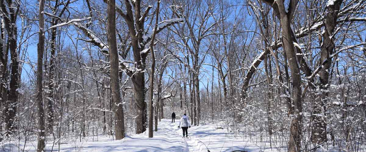 two people walk down a wooded trail on snowshoes on a sunny day. The trees are coated in snow.