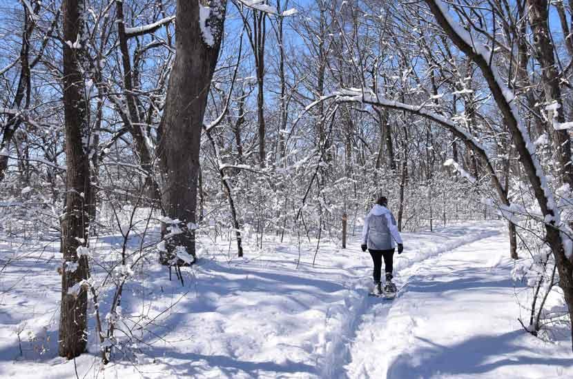 a woman walks through a snow-covered forest on snowshoes.