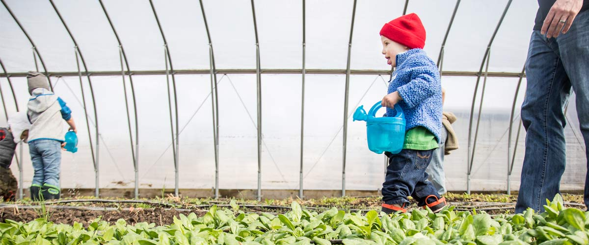 a boy in a red had holds a blue watering can and walks along small plants in a greenhouse.