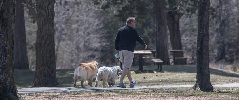a man walks two large light-colored dogs on a paved trail through trees and a picnic area.