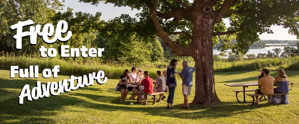 people sit at two picnic tables under a large tree.