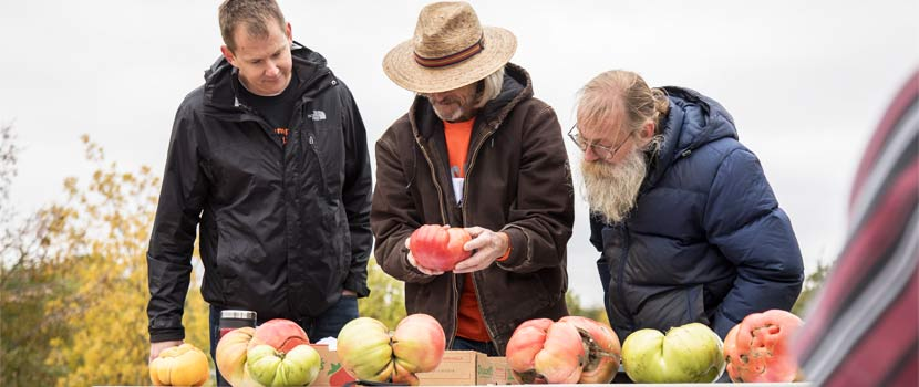 Three men look at large tomatoes on a table.