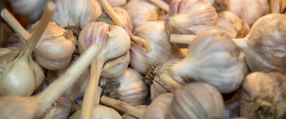 a pile of whole garlic heads.