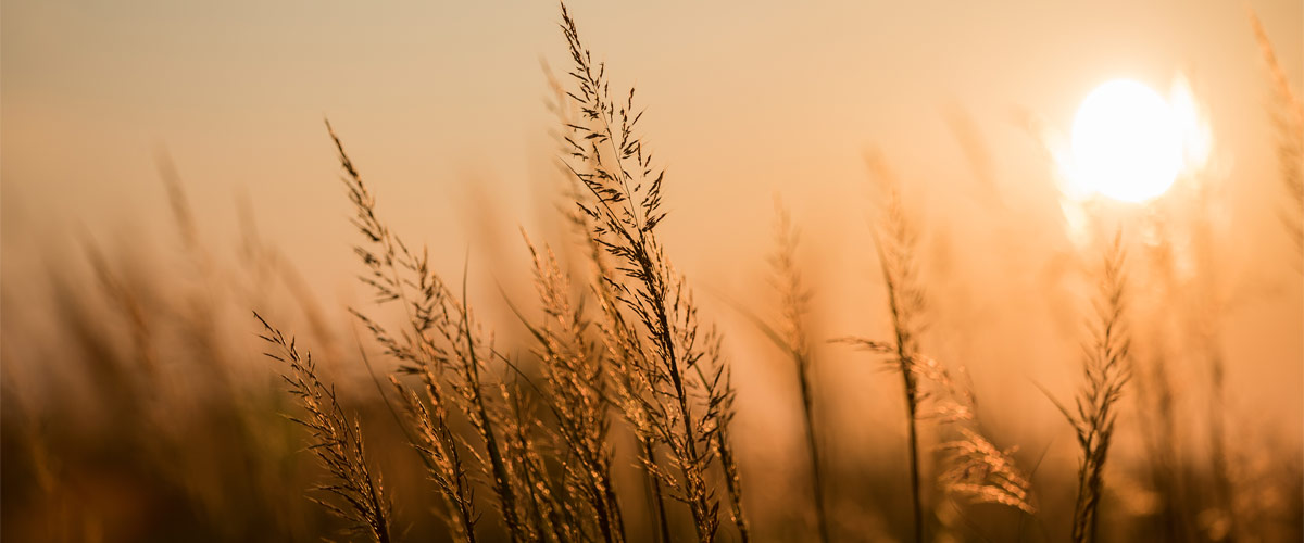 The sun sets over prairie grasses creating an orange glow.