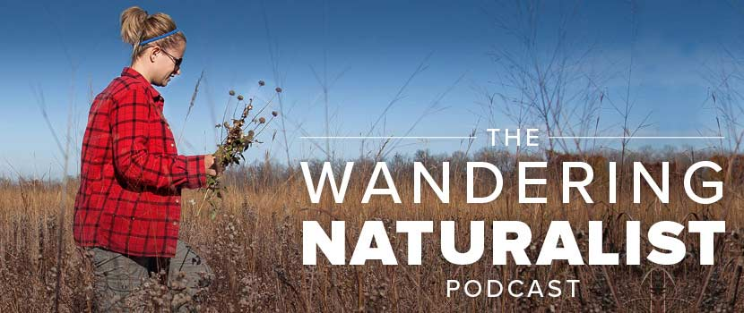 A woman in a red flannel shirt collect plants in a prairie. Text on the image says The Wandering Naturalist Podcast.