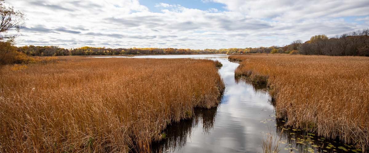 A path of water cuts through tall orange grasses before opening out to a lake in the fall.
