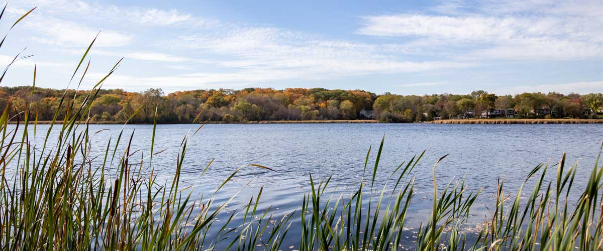 A lake framed by cattails in the foreground and a shoreline of colorful trees in the fall.