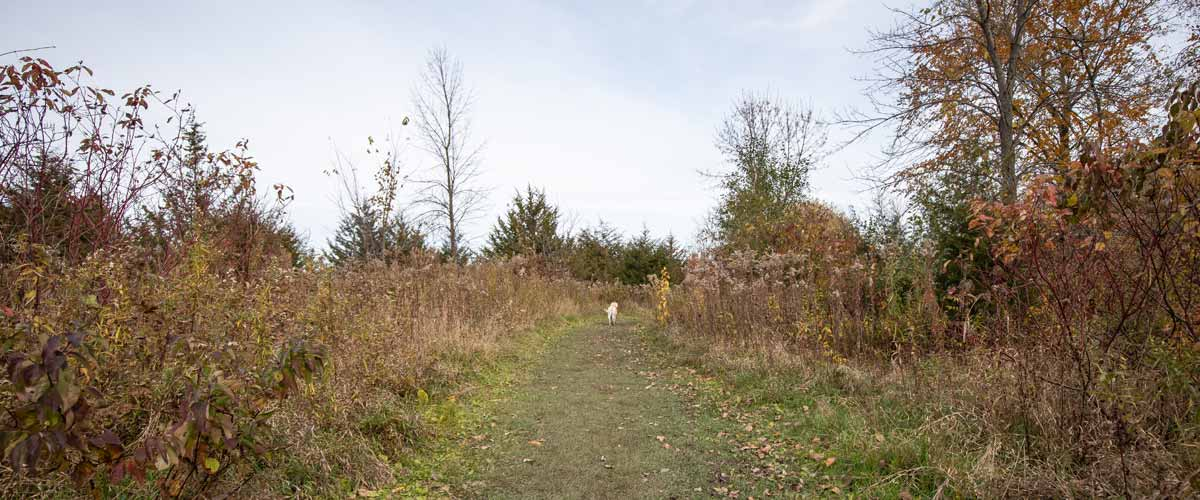 A dog runs away from the camera down a grassy path in the fall.