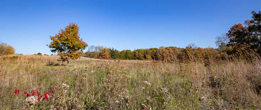 A prairie edged by a stand of trees in the fall.