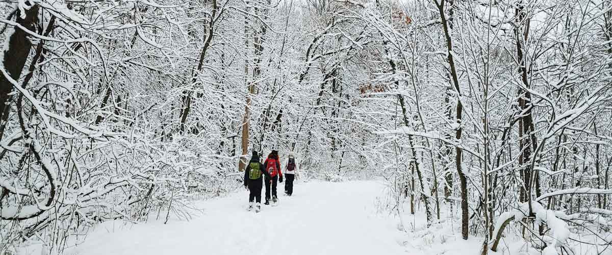 Three people snowshoe down a snow-covered trail through the woods.