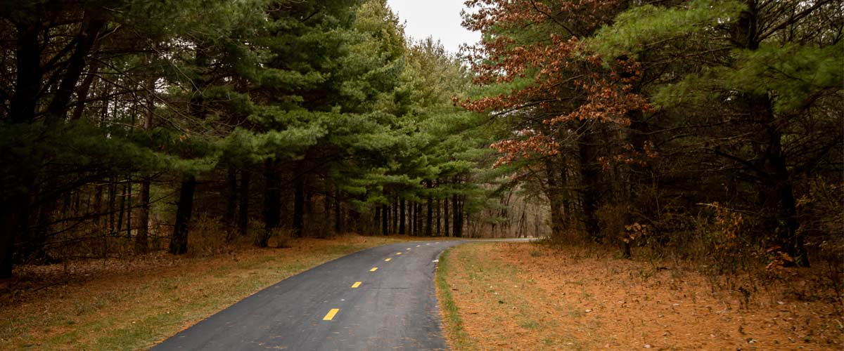 A paved trail cuts through tall evergreen trees on a cloudy day.