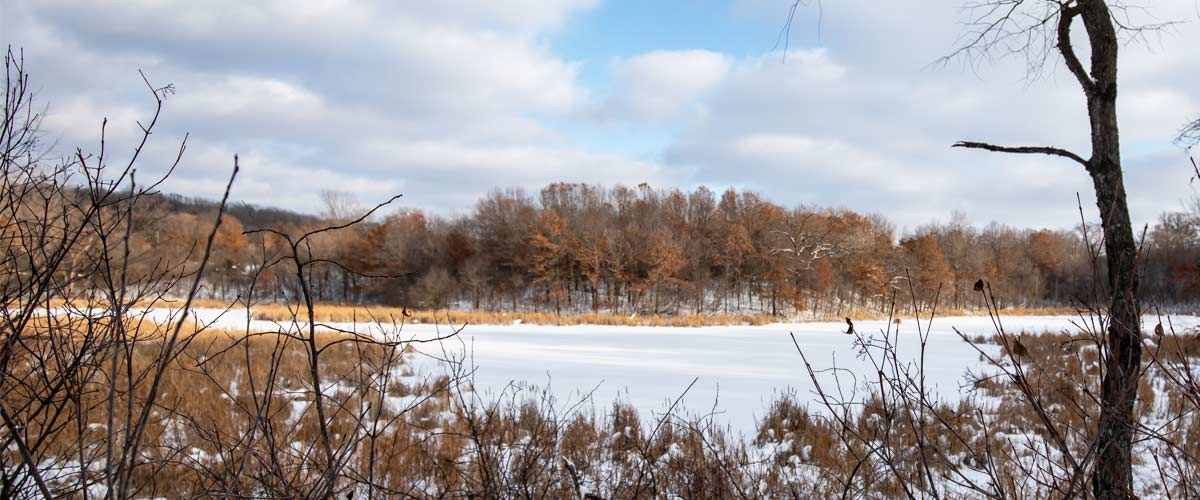 A small snow-covered lake is lined by grasses and trees.
