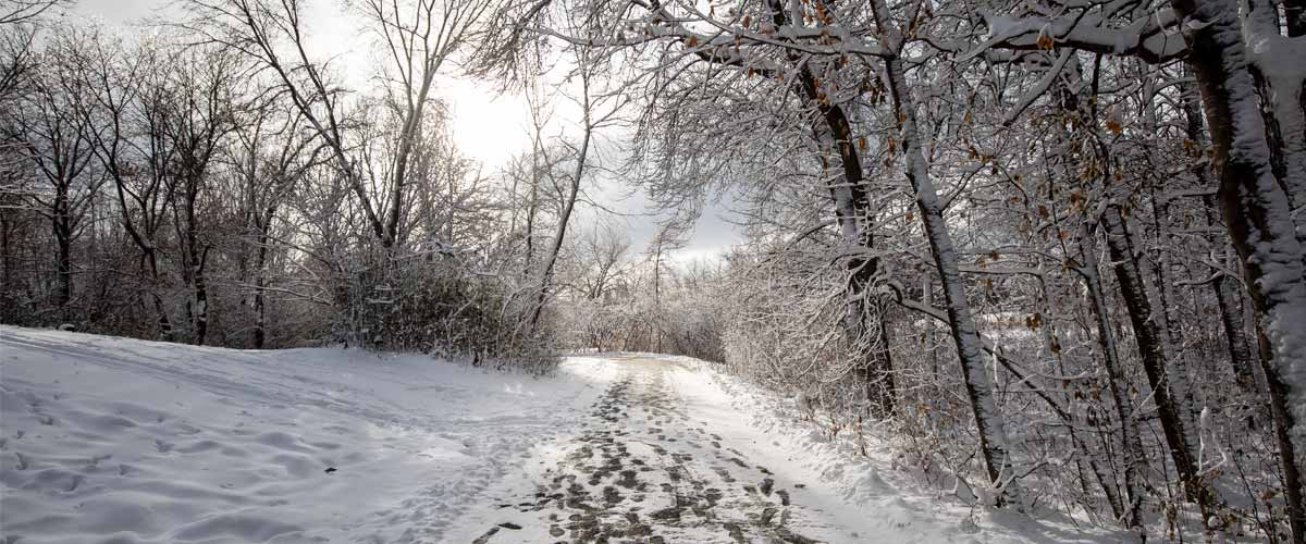 A snowy trail with forest to the right and open space to the left.