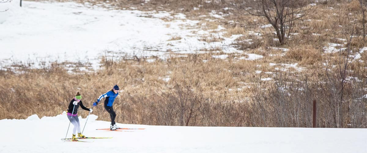 Two people cross-country ski on a trail next to brown grasses.