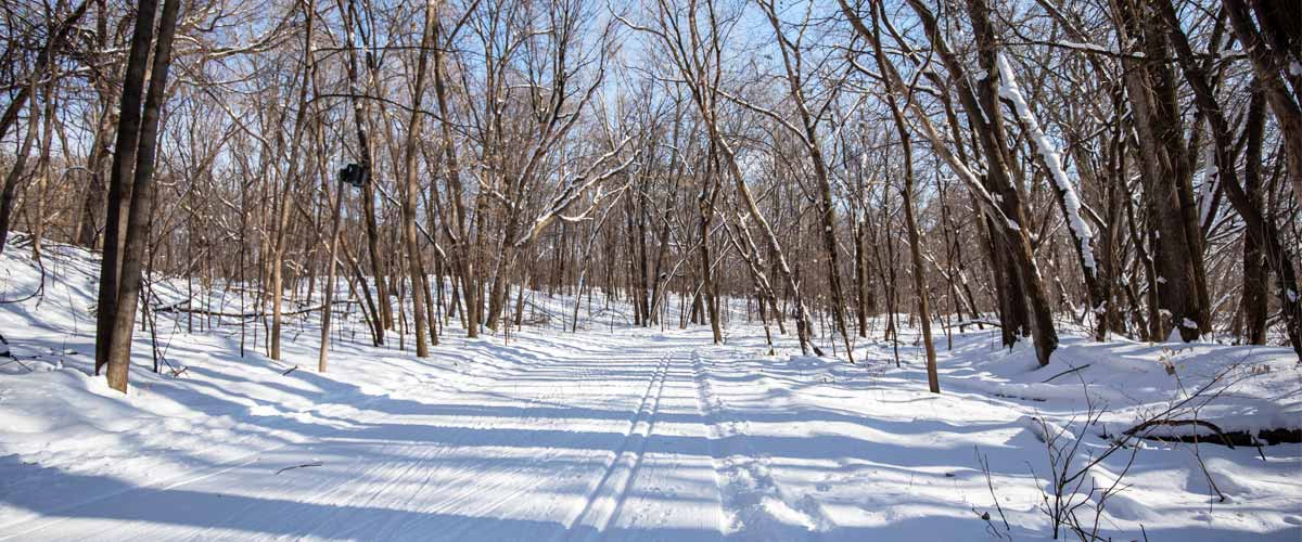 A groomed ski trail cuts through a forest.