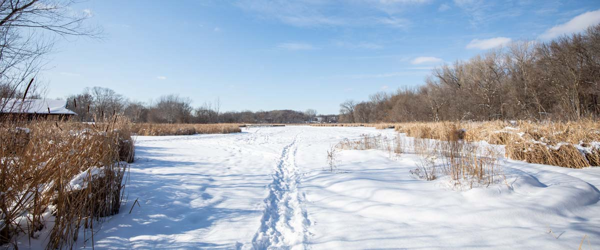Snowshoe trails lead through a snowy marsh area.